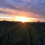 Notre vignoble un lundi matin  vines vineyard wine instadailyhellip