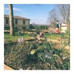 Joli petit jardin de cur  la Maison des Vinshellip