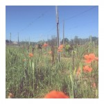 Un petit tour chez nos voisins vineyard flowerpower spring jolishellip